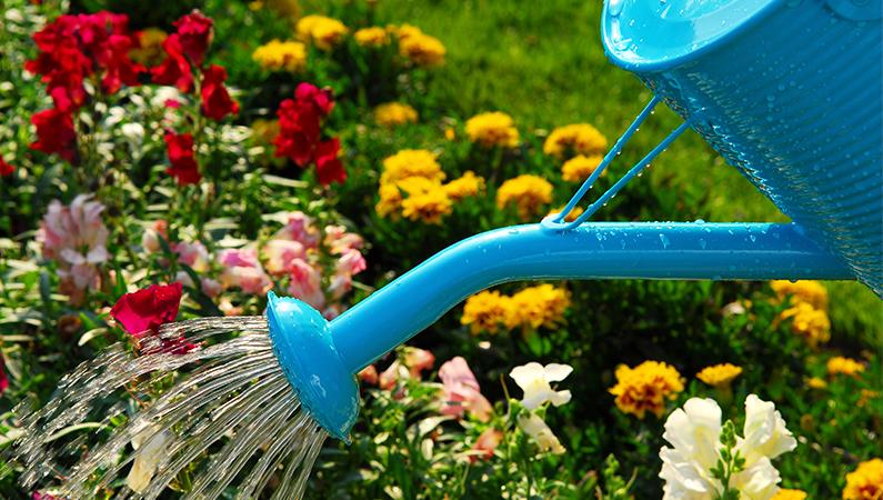 plant vand og lug din have