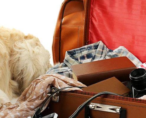Hunden skal med på ferie
