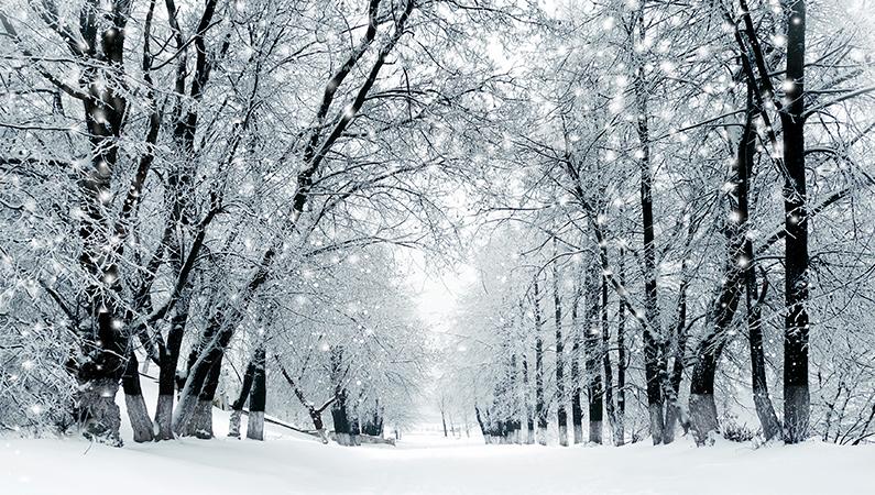 Forbered dit immunforsvar på vinteren