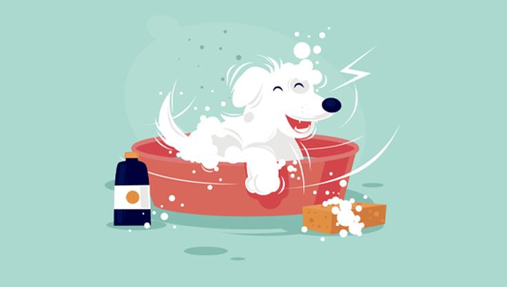 hund-faar-bad