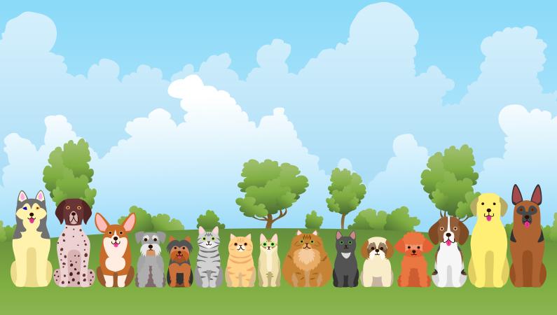 Beskyt kæledyrene mod lopper